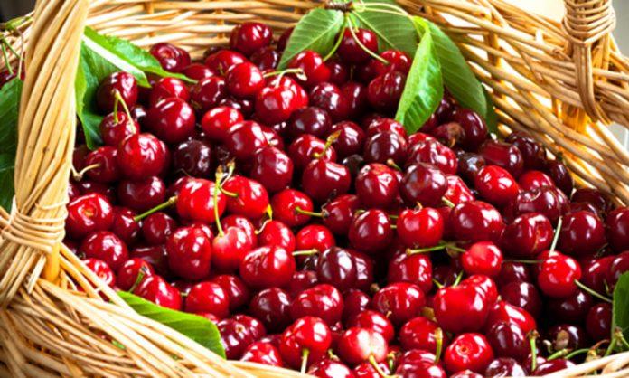 festa delle ciliegie