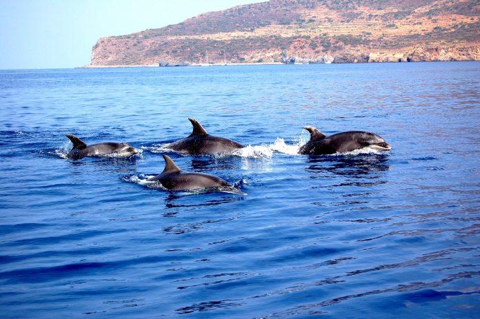 delfini roma fiumicino